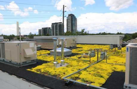 Low-rise commercial industrial complex is home to a beautiful green roof and nesting birds.