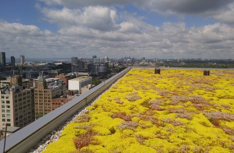 """QRC West is a landmark development in Toronto's Downtown West - a model of urban intensification, featuring the modernization of a historic building. The green roof high above the city streets, quietly, invisibly helps manage up to 1"""" of stormwater when it rains."""